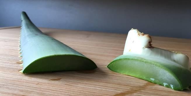 Aloe Arborescens Blatt - Frischeblat