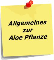 Allgemeine Informationen zur Aloe