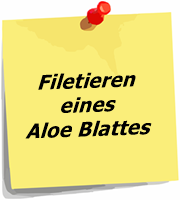 Filetieren eines Aloe Blattes