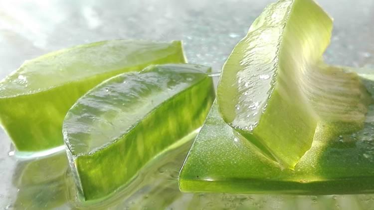 Aloe Produkte mit Bester Qualität durch 15 Jahre Erfahrung