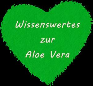 Wissenswertes zu Aloe Vera