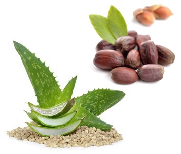 Aloe Vera und Jojoba - Kombination für trockene Haut