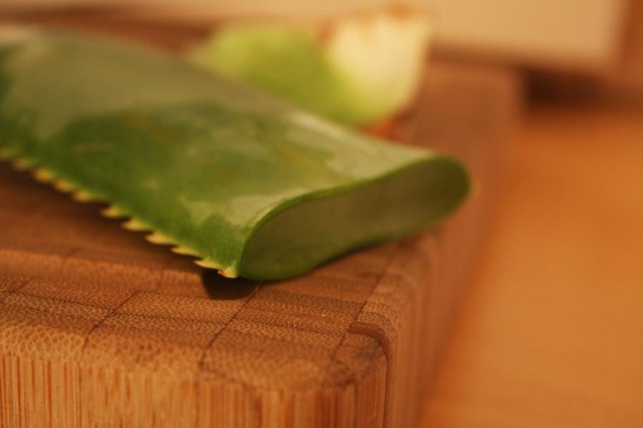 Aloe Frischeblätter