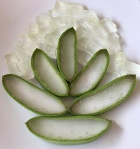 Aloe Gelzunge - frisch & unbehandelt - in Würfel geschnitten (200 g) im Glas